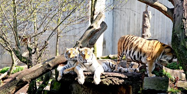 zoo_6