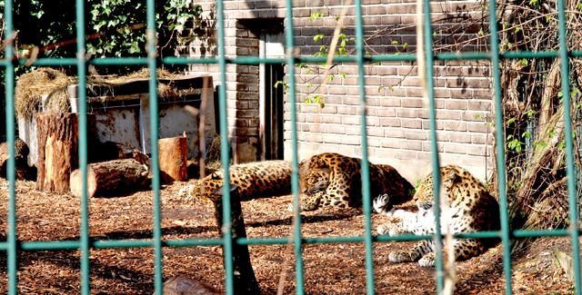 zoo_7