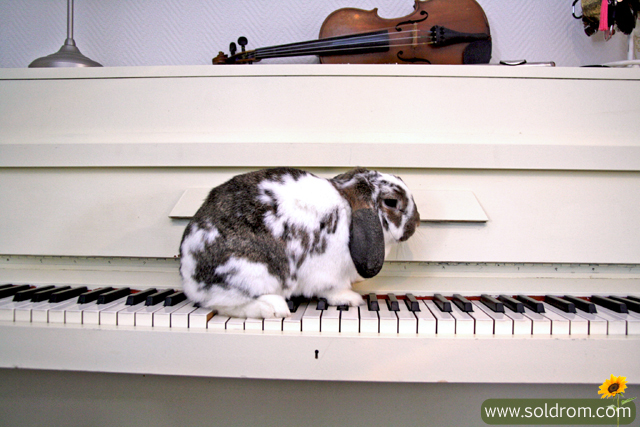 Alvin can't stay away from my piano