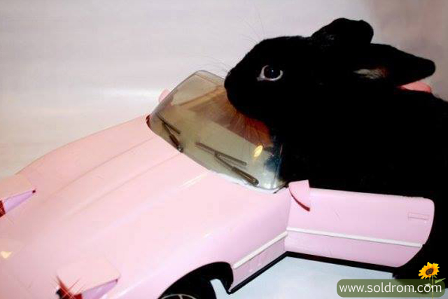 Buster is a cooler driver than Barbie
