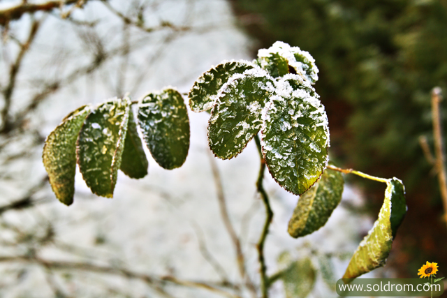 winter_wonderland_10