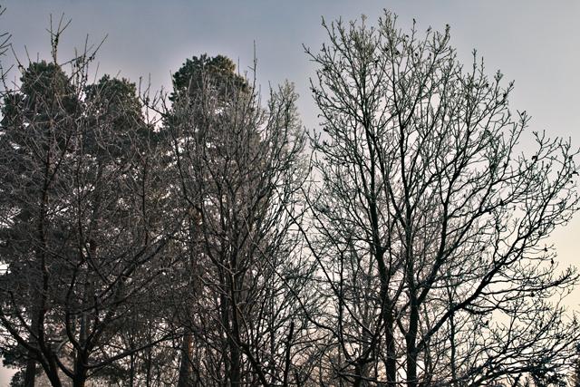 winter_wonderland_11