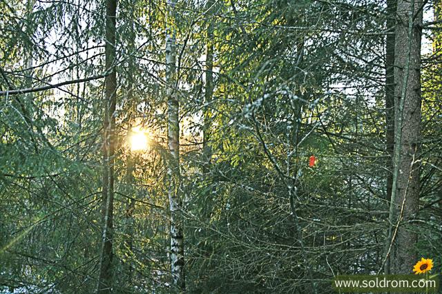 winter_wonderland_2