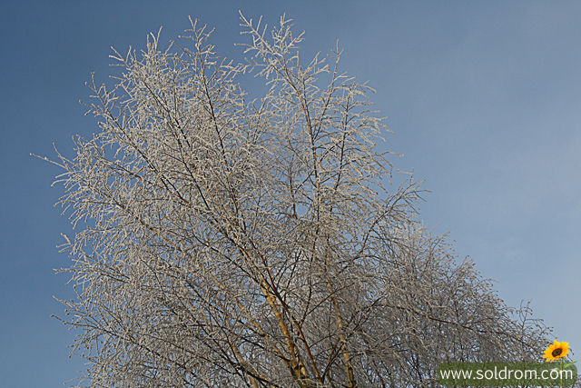 winter_wonderland_3