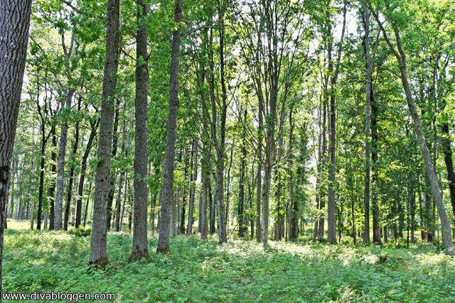 borreskogen