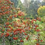 Botanical Garden -Autumn Edition