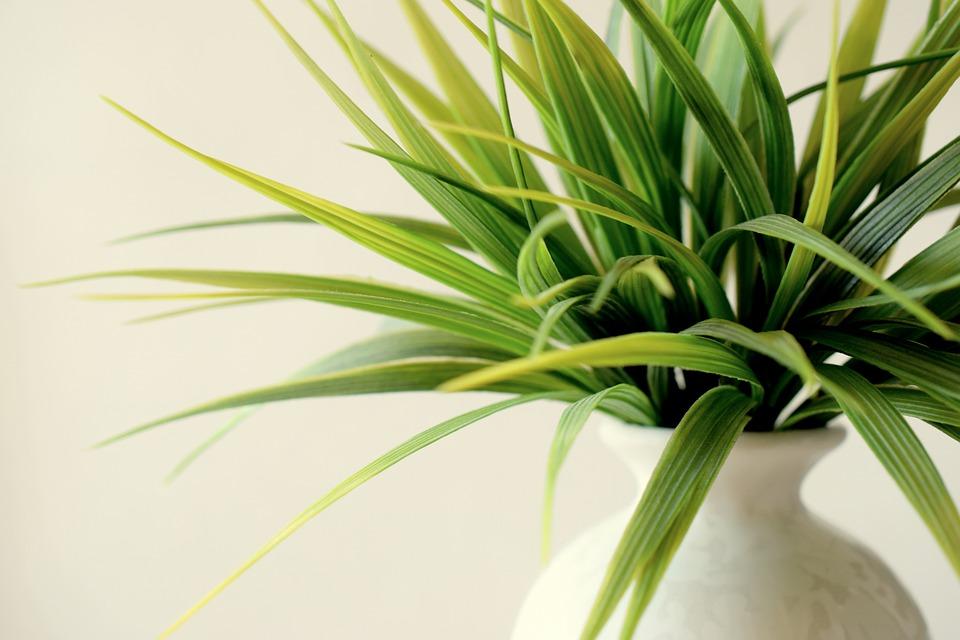 fordelene med planter