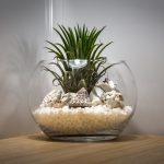 Terrarium - Create Your Own Green World