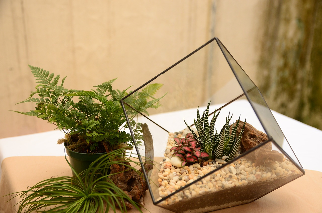 Terrarium – Create Your Own Green World