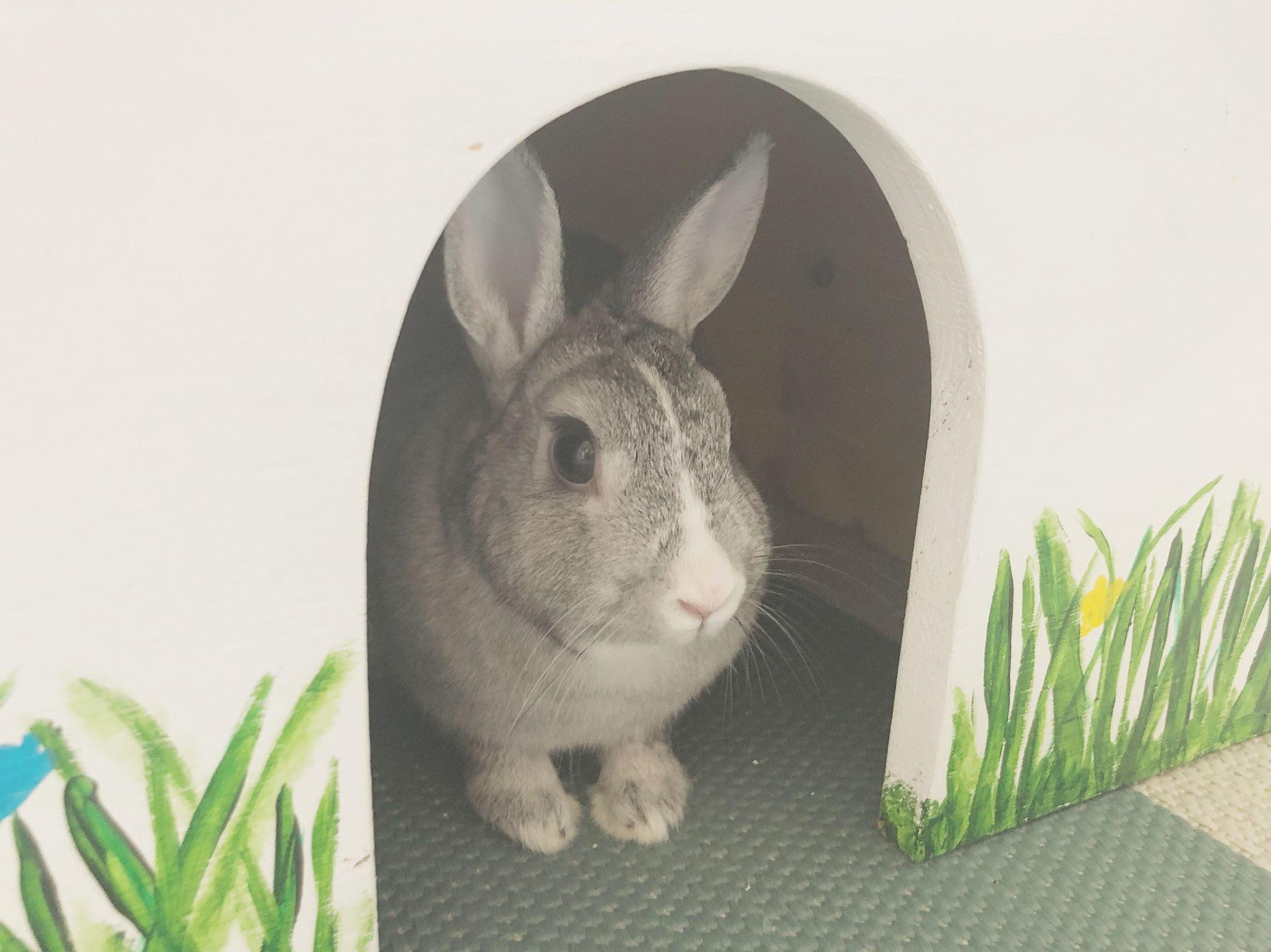 Hvordan bygge eget kaninhus